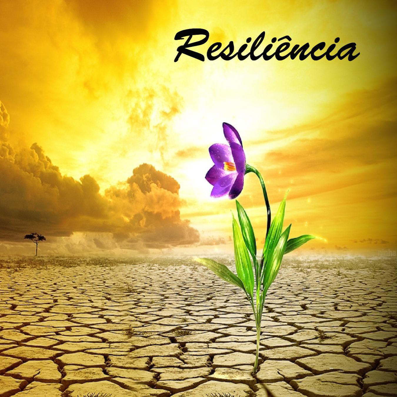 Resiliência que vence o mundo! | Reflexões para a vida ...